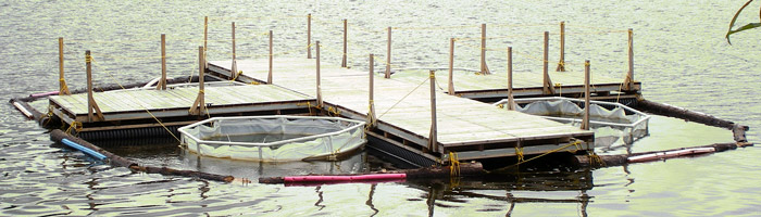 Pilot project of a floating platform on Saint-Augustin lake.